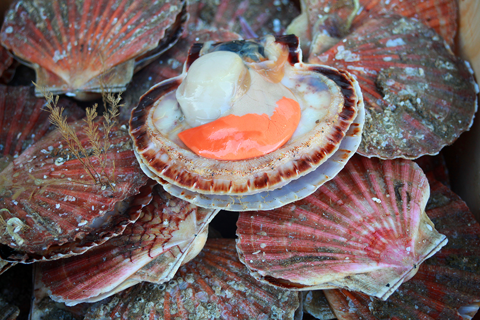 produits mer coquilles saint-jacques